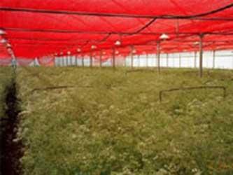 red net